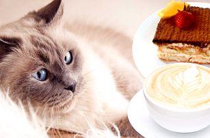 Káva nebo čaj a dezert v kočičí kavárně