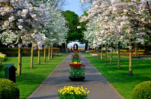 Holandsko, květinový park Keukenhof a Amsterdam s dopravou a průvodcem, duben-květen 2017