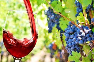 Jarní vinařský pobyt na jižní Moravě s polopenzí pro DVA