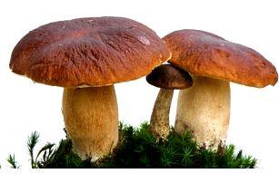 Vypěstujte si vlastní houby: 3 sadby pěstebního mixu 8 druhů lesních hub, pošta zdarma
