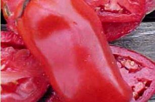 Gigantická rajčata - 200 semen
