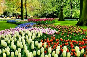 Květinový park Keukenhof s návštěvou Amsterdamu
