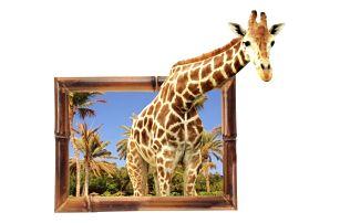 3D samolepka na zeď - Zvědavá žirafa