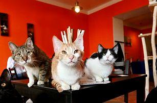 2 dezerty z denní nabídky v kočičí kavárně
