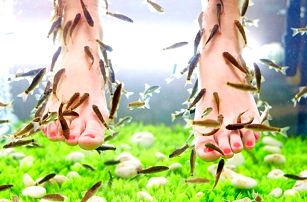 Blahodárná lázeň chodidel s rybičkami Garra rufa
