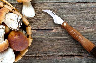 Zavírací houbařský nožík s kartáčkem