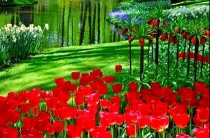 Největší květinový park Keukenhof - 3 denní zájezd do Holandska