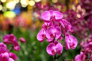 Mezinárodní výstava orchidejí, velikonoční trhy a novoroční výprodeje pro 1 osobu včetně dopravy.