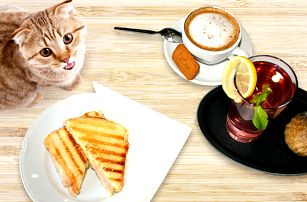 Výtečná svačinka v kočičí kavárně v centru