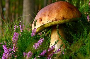 Sadba lesních hub - 2 balení mixu osmi druhů lesních hub za jedinečnou cenu.