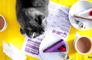 Domácí dort a káva nebo čaj v kočičí kavárně