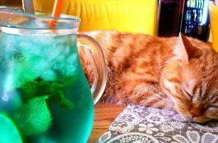 Domácí limonáda i dezert v útulné kočičí kavárně