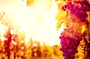 Jižní Morava s vínem a živou hudbou