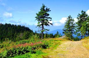 Šumava s polopenzí, aktivitami a třeba i masáží