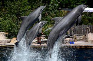 Delfinárium a ZOO v Norimberku   Jednodenní poznávací zájezd do Německa