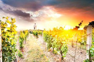 Jižní Morava: jídlo i privátní wellness