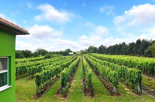 Za vínem na jižní Moravu: pobyt v penzionu a košty